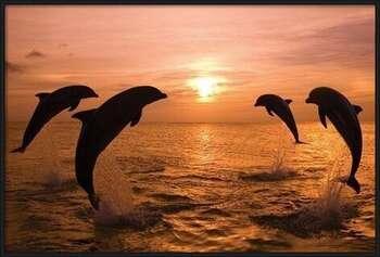 Plagát Delfíny