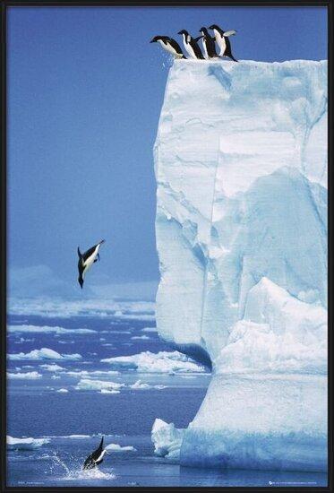Plagát  Penguins - steve bloom