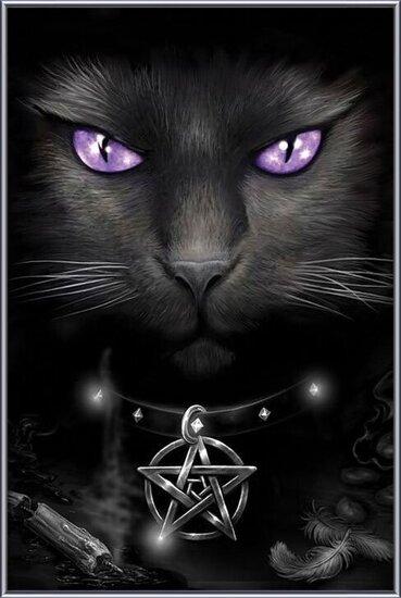 Plagát Magical cat