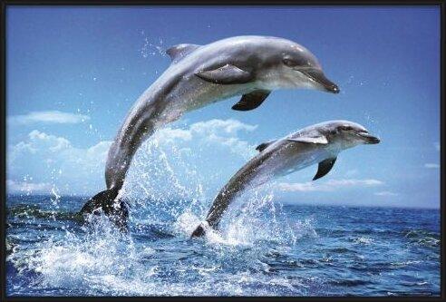 Plagát Dolphins - duo